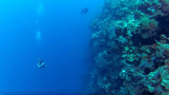 blue water divers grand turk reviews